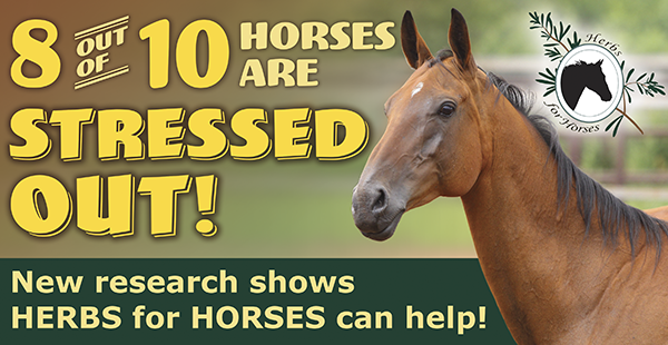 8 out of 10 Horses are Stressed Out!